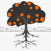 HÄLFTE SAISON - Own Roots Premium- Baumpatenschaft