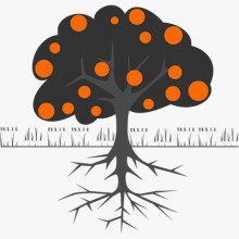 Own Roots Basic - Apadrina un árbol (MEDIA TEMPORADA)