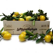 Limequats: 1kg (il suffit d'ajouter 1 kg par boîte d'oranges)